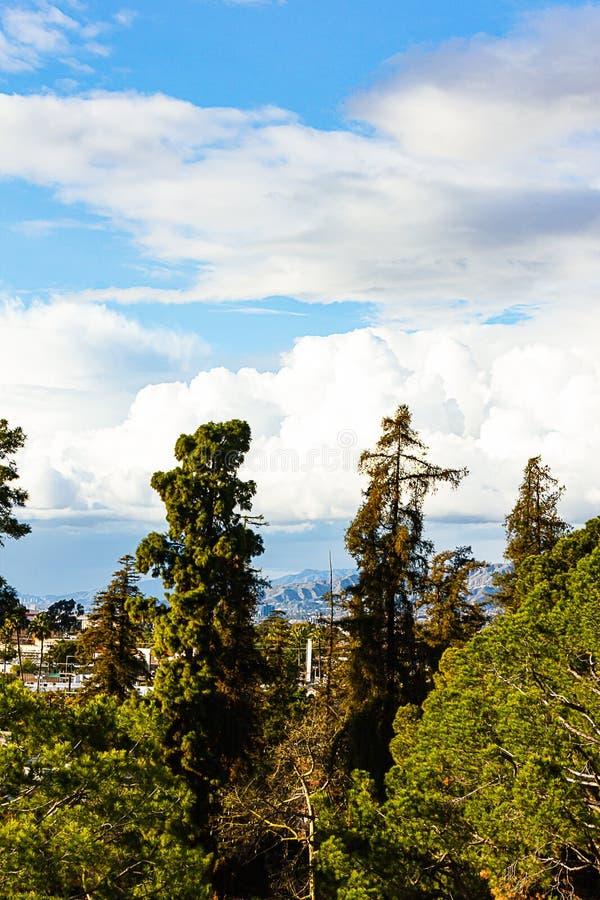 Disiduous ed alberi sempreverdi con il cielo blu delle costruzioni con le nuvole immagini stock