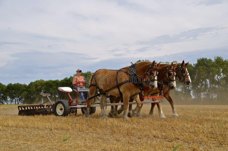 Disking velho do tempo de um campo com cavalos fotografia de stock