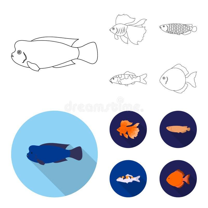 Diskus, Gold, Karpfen, koi, scleropages, fotmosus Gesetzte Sammlungsikonen der Fische im Entwurf, flacher Artvektor-Symbolvorrat vektor abbildung