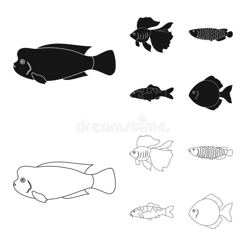 Diskus, Gold, Karpfen, koi, scleropages, fotmosus Gesetzte Sammlungsikonen der Fische im Schwarzen, Entwurfsartvektor-Symbolvorra lizenzfreie abbildung