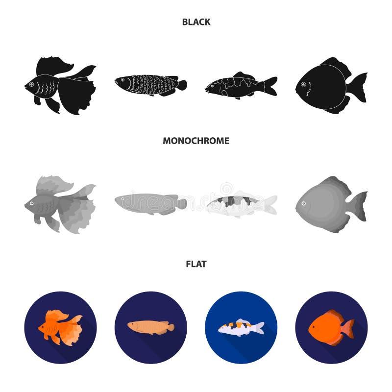 Diskus, Gold, Karpfen, koi, scleropages, fotmosus Gesetzte Sammlungsikonen der Fische im schwarzen, flachen, einfarbigen Artvekto stock abbildung