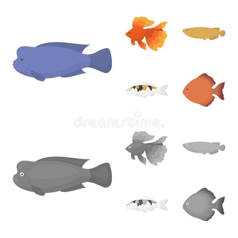 Diskus, Gold, Karpfen, koi, scleropages, fotmosus Gesetzte Sammlungsikonen der Fische in der Karikatur, einfarbiger Artvektor-Sym vektor abbildung