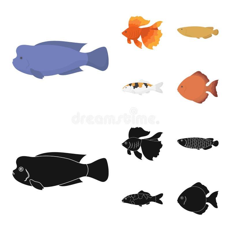 Diskus, Gold, Karpfen, koi, scleropages, fotmosus Gesetzte Sammlungsikonen der Fische in der Karikatur, schwarzer Artvektor-Symbo vektor abbildung