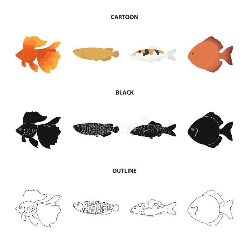 Diskus, Gold, Karpfen, koi, scleropages, fotmosus Gesetzte Sammlungsikonen der Fische in der Karikatur, Schwarzes, Entwurfsart-Ve stock abbildung