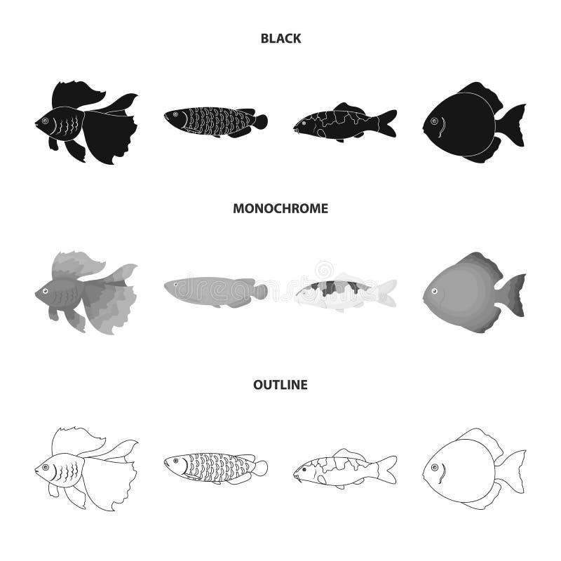 Diskus, Gold, Karpfen, koi, scleropages, fotmosus Gesetzte Sammlungsikonen der Fische in Schwarzem, einfarbig, Entwurfsart-Vektor vektor abbildung