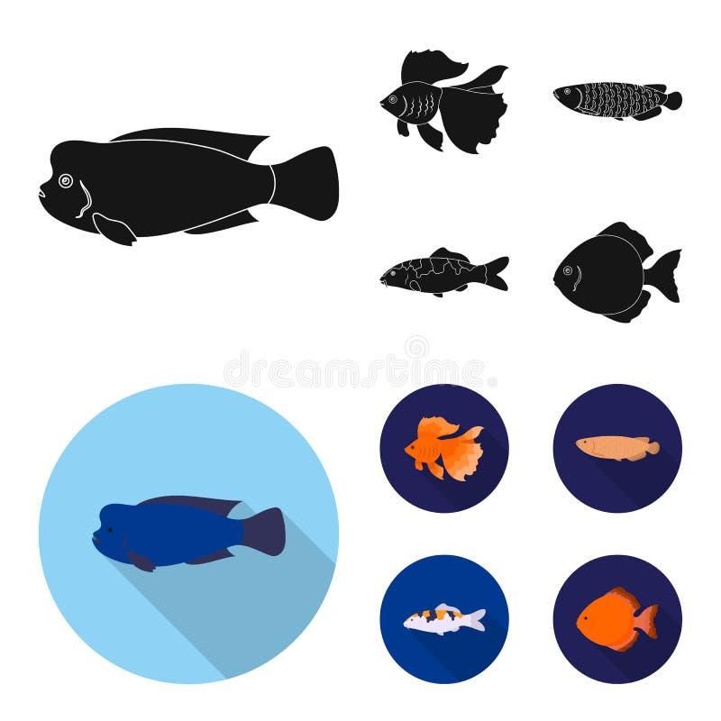 Diskus, Gold, Karpfen, koi, scleropages, fotmosus Gesetzte Sammlungsikonen der Fische schwarzes, flaches Artvektorsymbolauf lager stock abbildung