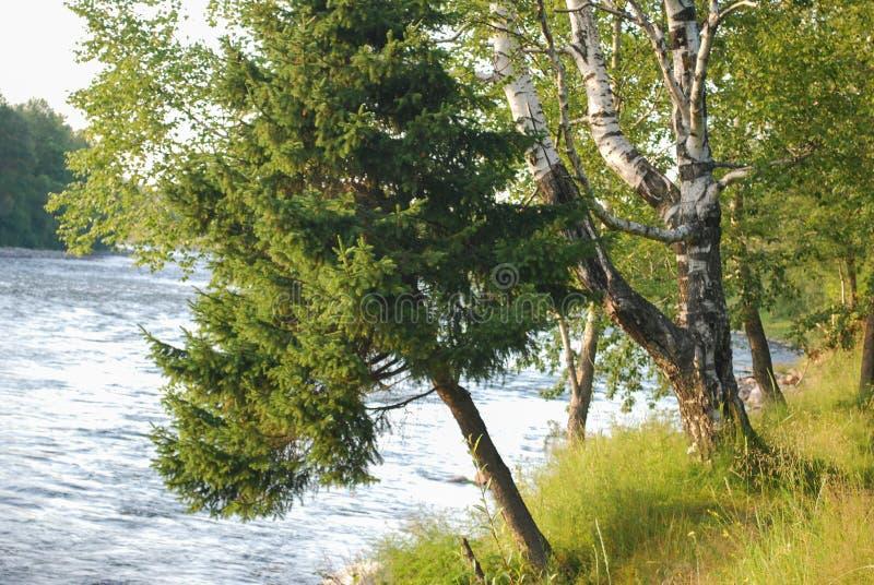 Disminución de los árboles al río foto de archivo libre de regalías