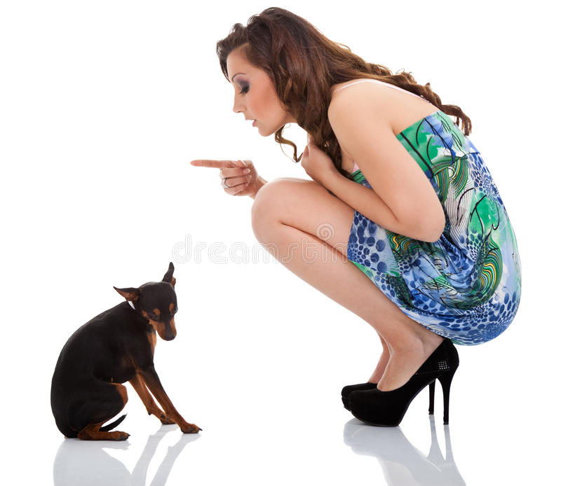 Disobedient dog. Disobedient little dog with lady dog, on white background stock photo
