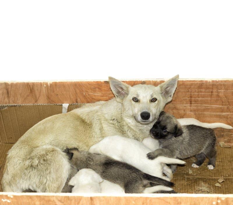 Disordine dei cuccioli fotografia stock