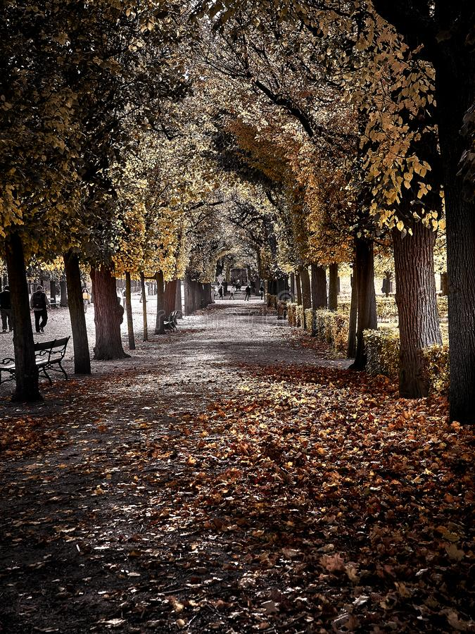 Disparado de uma rua completamente das folhas vermelhas no parque foto de stock royalty free
