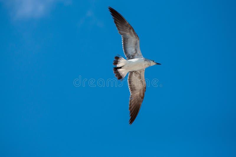 Download Pássaro imagem de stock. Imagem de vermelho, filial, praia - 29849553