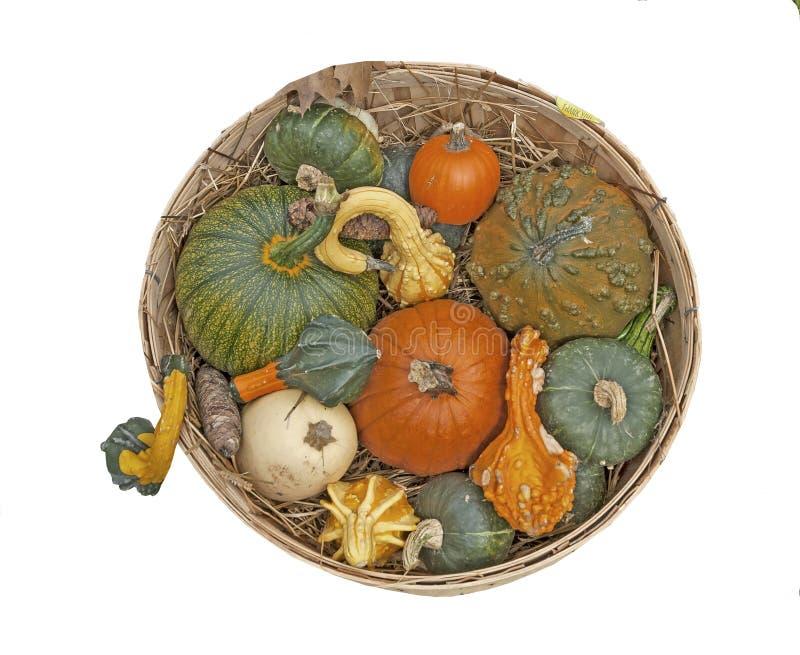 Display of colorful pumpkins royalty free stock image
