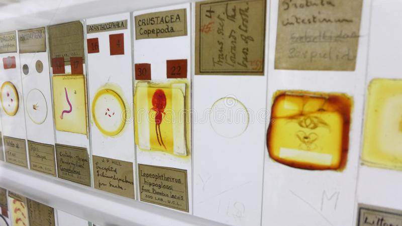 Display of insects and micro life on the neon viewer in the Grant Museum of Zoology. London stock image