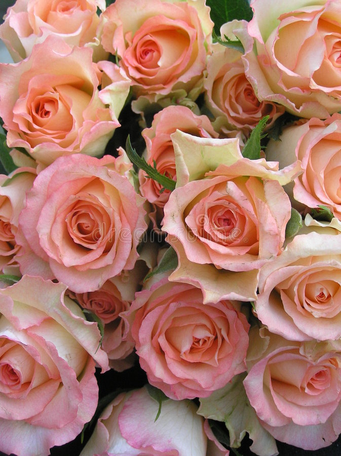 Display of multicolored roses royalty free stock photography