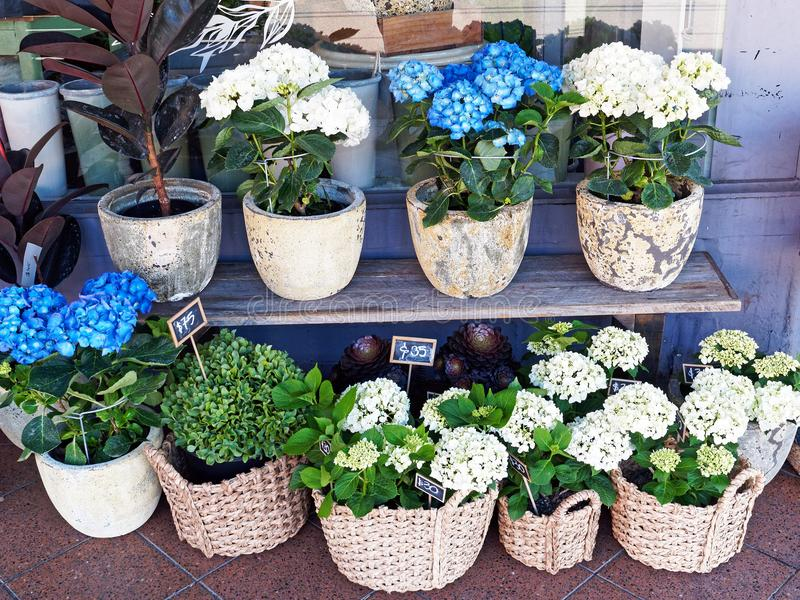 Flower Plants in Pots and Cane Baskets stock images