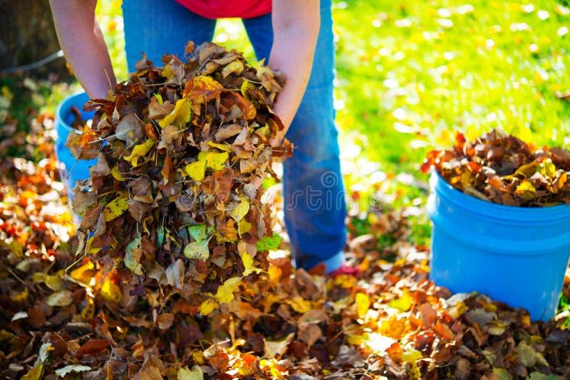 Disponga le foglie di caduta immagine stock