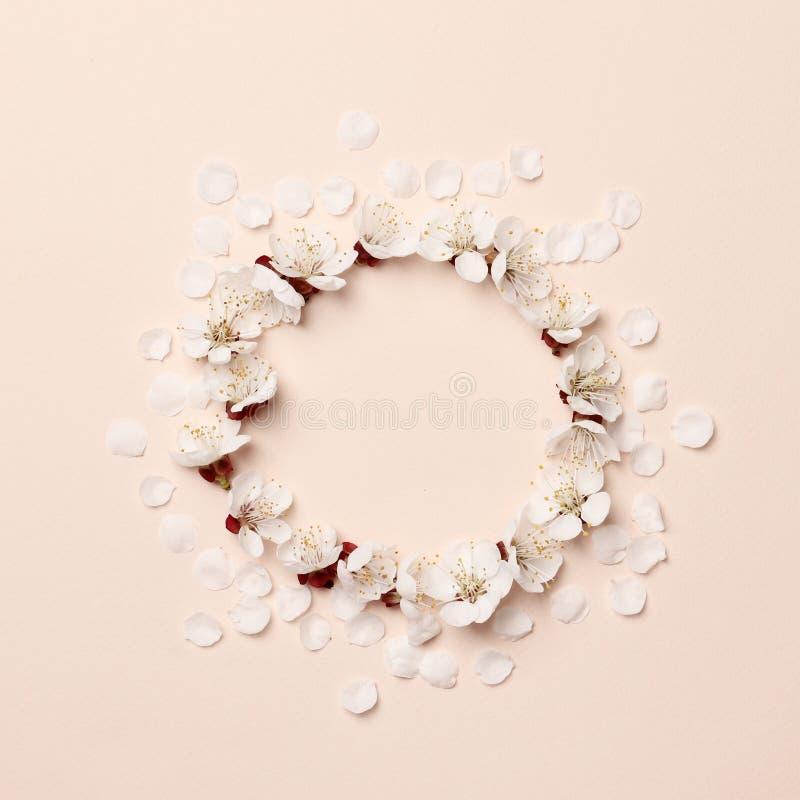 Disposição criativa do quadro feita de flores de florescência da mola do pêssego em um fundo cor-de-rosa fotografia de stock royalty free