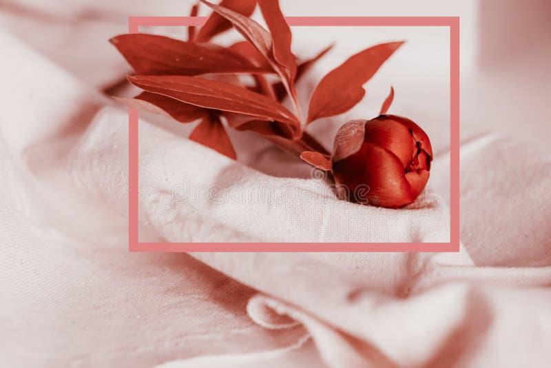 Disposição criativa feita da peônia que floresce a com um quadro tirado cor-de-rosa Conceito natural na cor coral viva macia imagem de stock royalty free