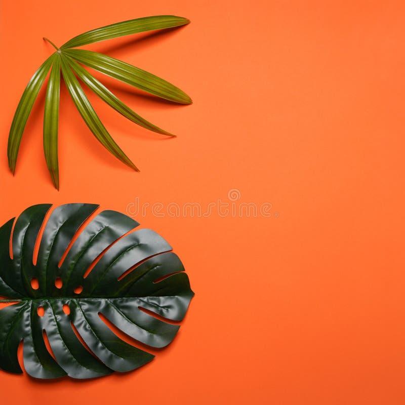 Disposição criativa feita das folhas tropicais coloridas no fundo alaranjado Conceito exótico do verão mínimo com espaço da cópia imagem de stock