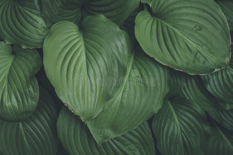Disposição criativa feita das folhas verdes Configuração lisa Fundo da natureza imagem de stock