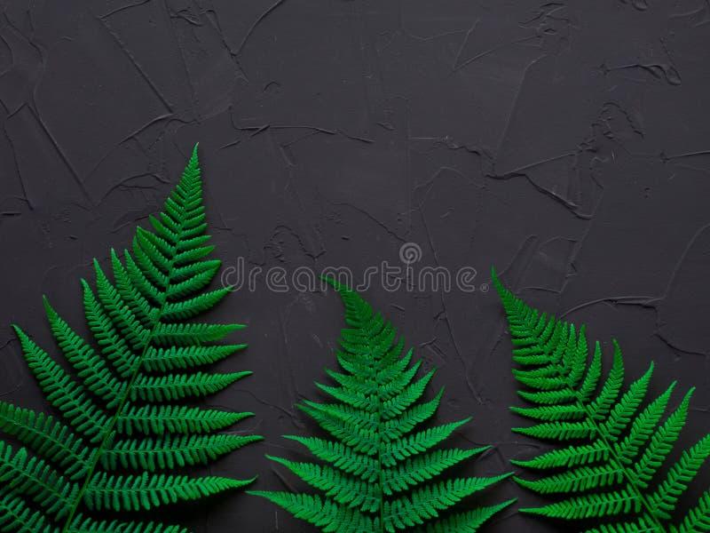 Disposição feita das folhas verdes Conceito da natureza Composição lisa da configuração para bloggers, compartimentos, meios soci imagens de stock