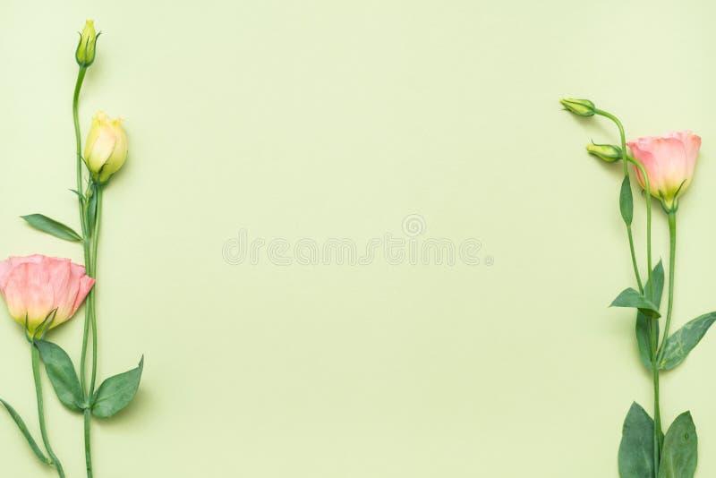 Disposição mínima da flor do fundo do verde do Eustoma ilustração royalty free