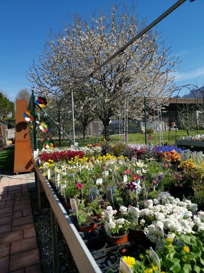 Disposición coloreada de las flores con un árbol blanco como fondo imagen de archivo libre de regalías