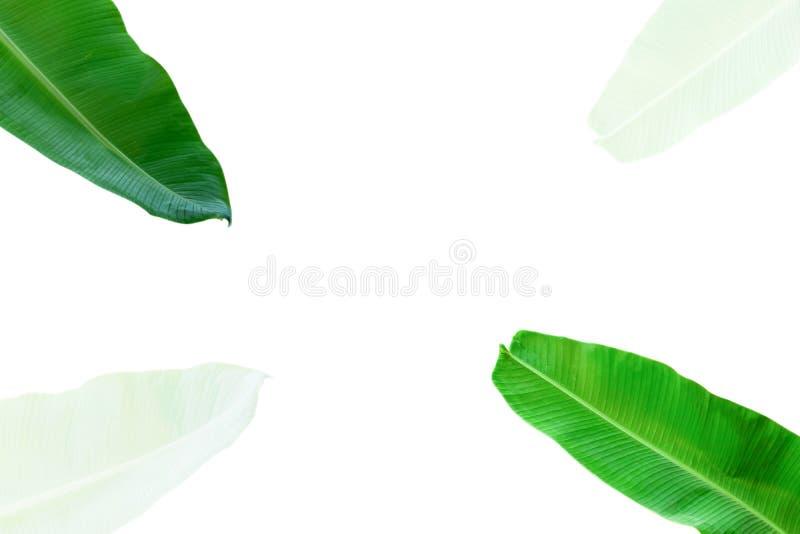 Disposición creativa hecha de flores y de hojas del plátano con la nota de la tarjeta de papel Endecha plana Concepto de la natur stock de ilustración