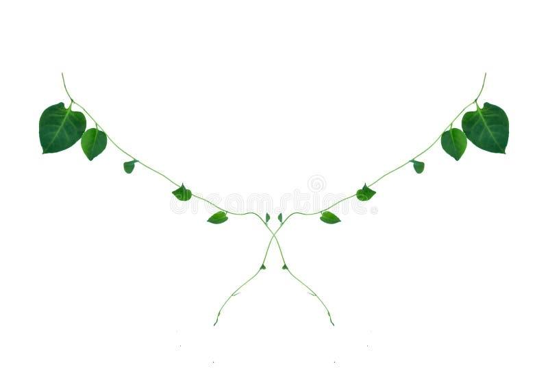 Disposición creativa hecha de flores y de la hoja tropical con la nota de la tarjeta de papel Endecha plana Concepto de la natura stock de ilustración