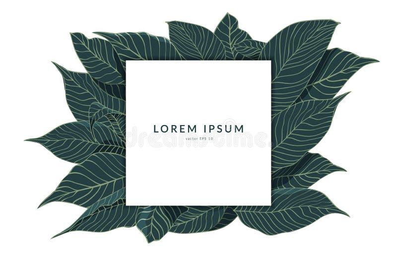 Disposición creativa hecha del bosquejo de hojas verdes con la nota de la tarjeta de papel aislada en el fondo blanco, endecha pl libre illustration