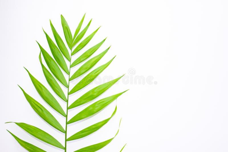 Disposici?n de hojas tropicales en un fondo blanco Concepto ex?tico del verano m?nimo con el espacio de la copia Endecha plana, v stock de ilustración