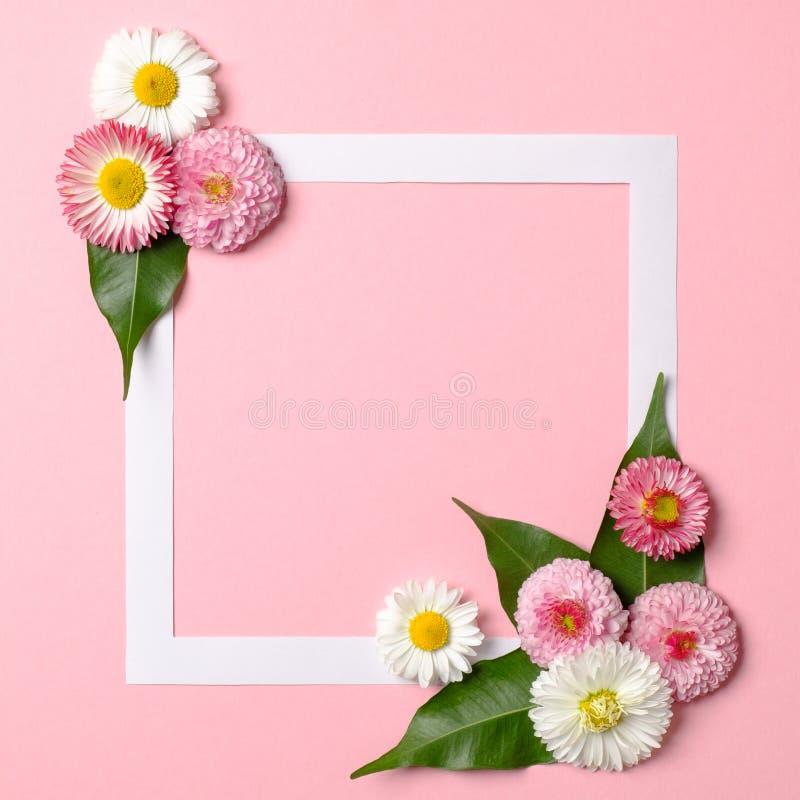Disposición de Minimalistic hecha de la frontera de papel del marco y de las flores blandas de la primavera en fondo rosado en co imagen de archivo libre de regalías