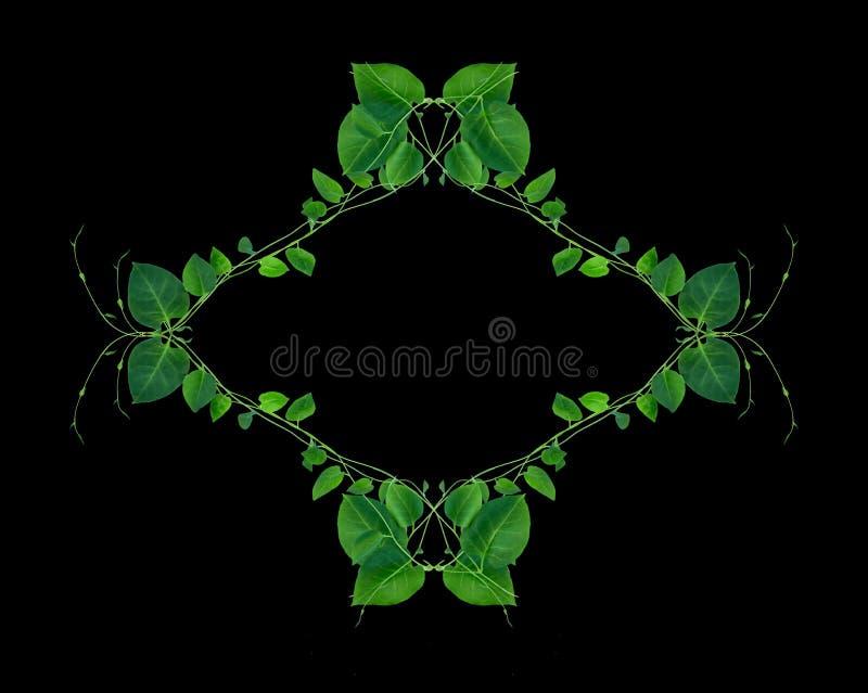 Disposici?n creativa hecha de flores y de hojas con la nota de la tarjeta de papel Endecha plana Concepto de la naturaleza libre illustration