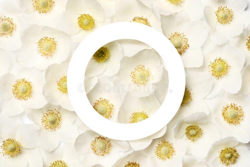 Disposici?n creativa hecha de las flores coloridas de la primavera ilustración del vector