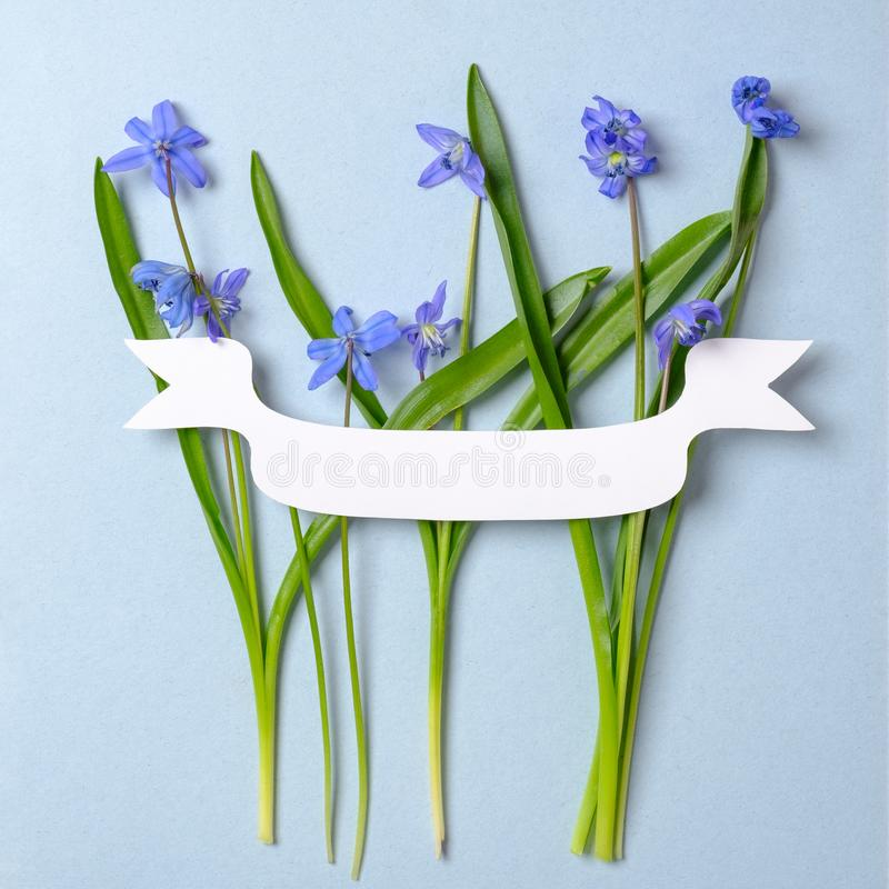 Disposici?n creativa hecha de las flores violetas de la primavera y de tarjeta vac?a en blanco en fondo azul en colores pastel Co foto de archivo