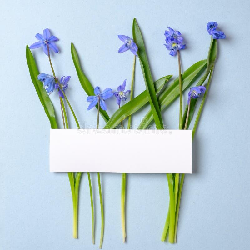 Disposici?n creativa hecha de las flores violetas de la primavera y de tarjeta vac?a en blanco en fondo azul en colores pastel Co fotografía de archivo