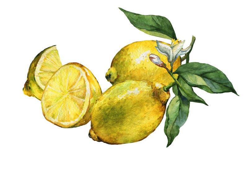 Disposition avec le citron frais entier et de tranche d'agrumes illustration libre de droits