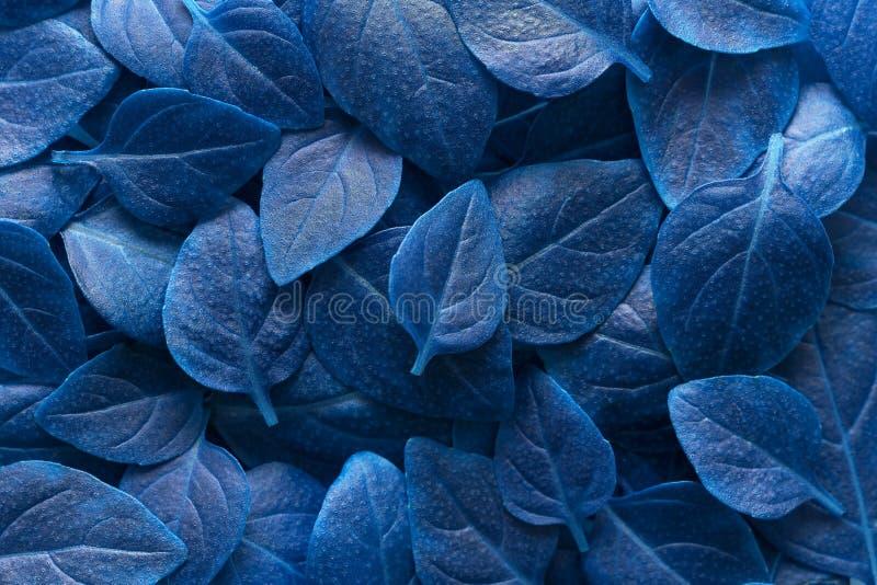Disposition bleue créative de feuilles Concept surnaturel L'espace plat de copie de vue sup?rieure de configuration photographie stock