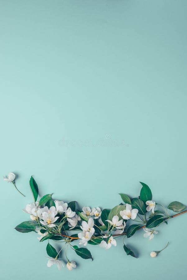 Disposition créative avec le pommier de floraison sur un fond bleu Configuration plate Concept - minimalisme de ressort image stock