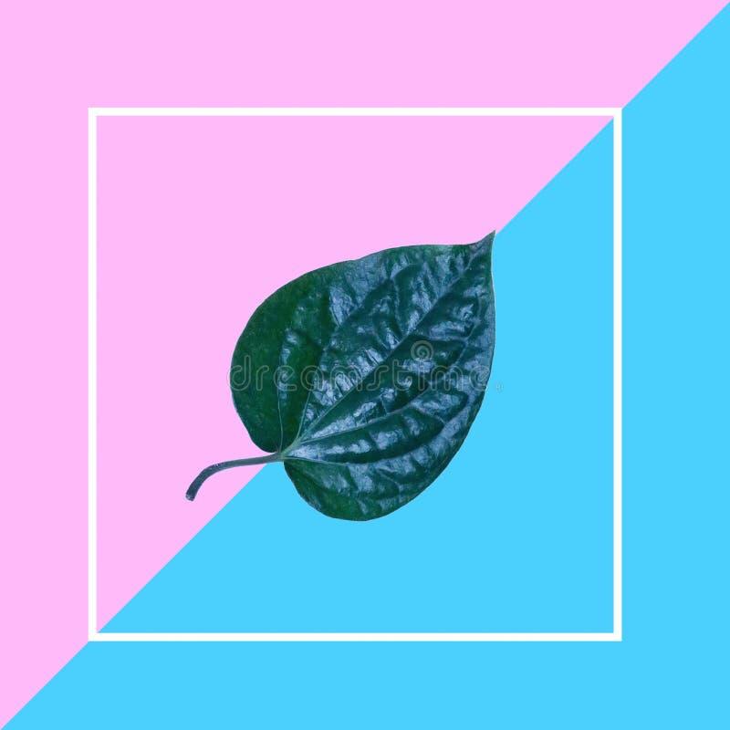 Disposition créative de disposition de feuille sur le fond rose et bleu avec le cadre blanc Configuration plate concept minimal d photo libre de droits