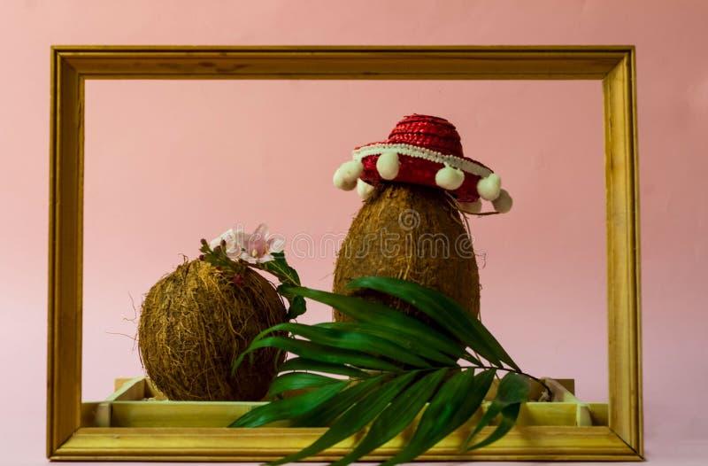 Disposition créative des noix de coco et des feuilles dans le cadre en bois Noix de coco dans le sombrero sur un fond rose Vue su photographie stock