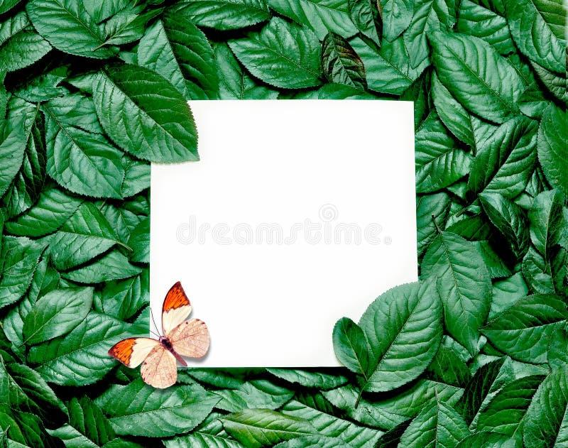 Disposition créative faite de feuilles avec la note de carte de papier Configuration plate Concept de nature image libre de droits