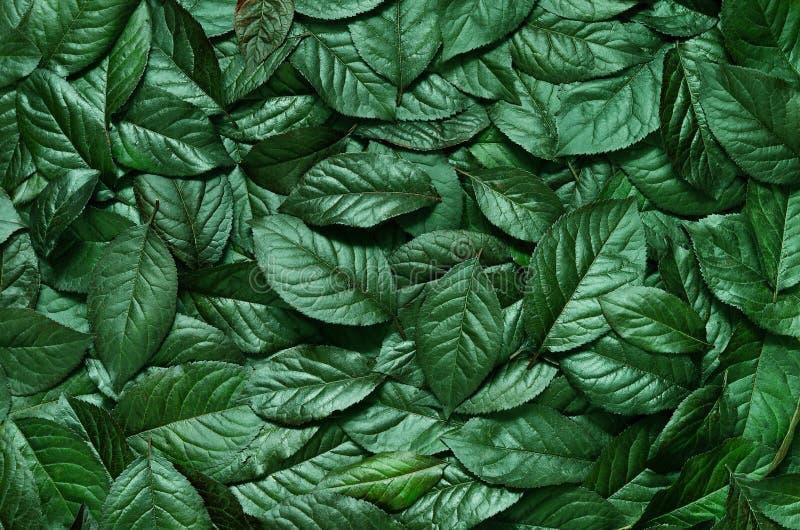 Disposition créative faite de feuilles Configuration plate Concept de nature photos libres de droits