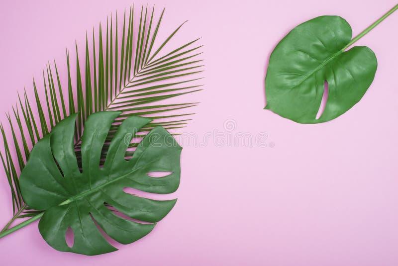 Disposition créative faite de feuilles tropicales colorées sur le fond rose Concept exotique d'?t? minimal avec l'espace de copie image libre de droits