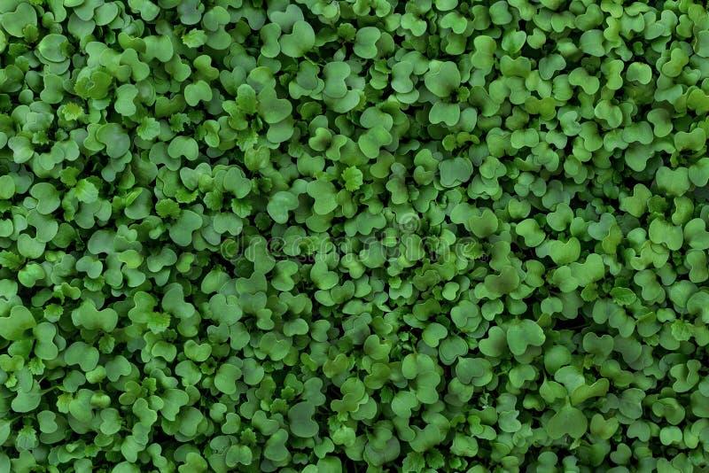 Disposition créative faite de feuilles vertes Configuration plate photo stock