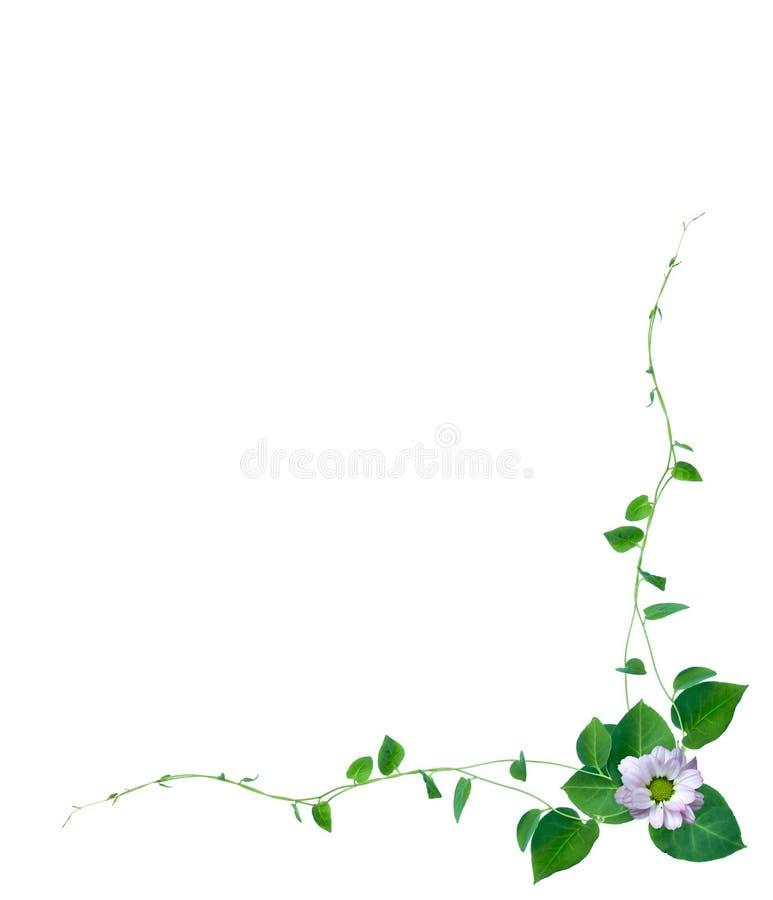 Disposition créative faite de fleurs et feuille tropicale avec la note de carte de papier Configuration plate Concept de nature,  illustration de vecteur