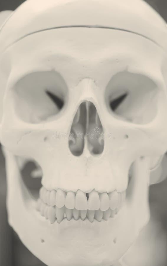 Disposition d'un plan rapproché humain de crâne, médicale photographie stock libre de droits