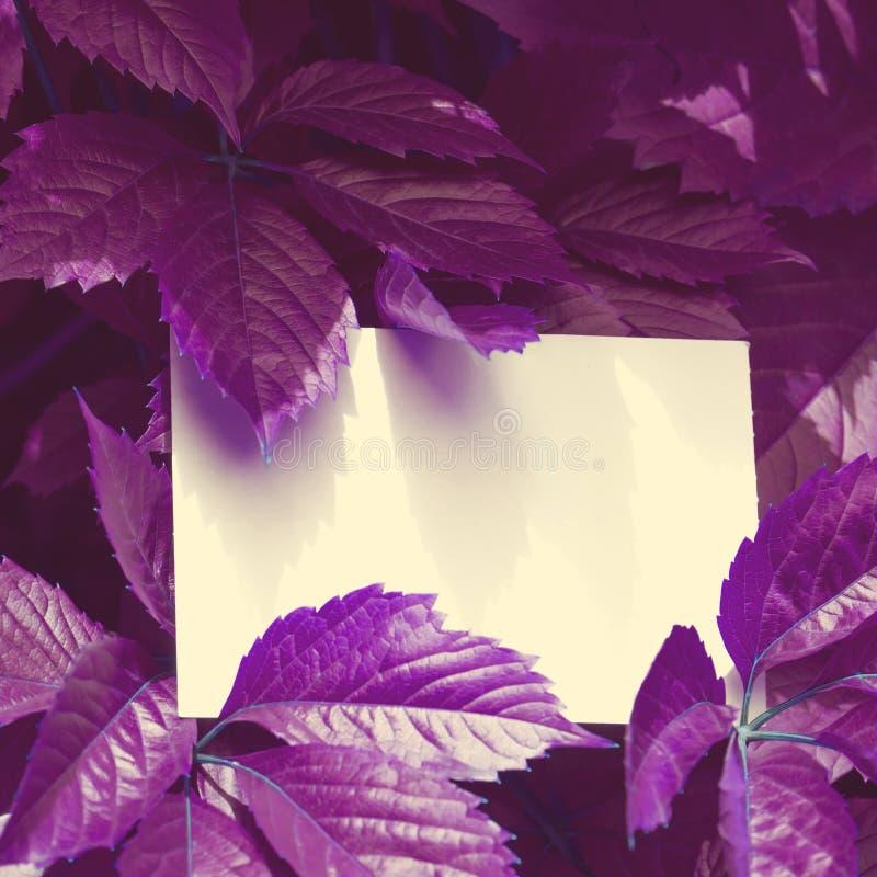 Disposition de feuilles violettes de couleur créative Concept surnaturel Pièce plate photo stock