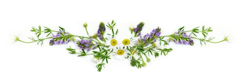 Disposition de fleurs de champ d'été image stock