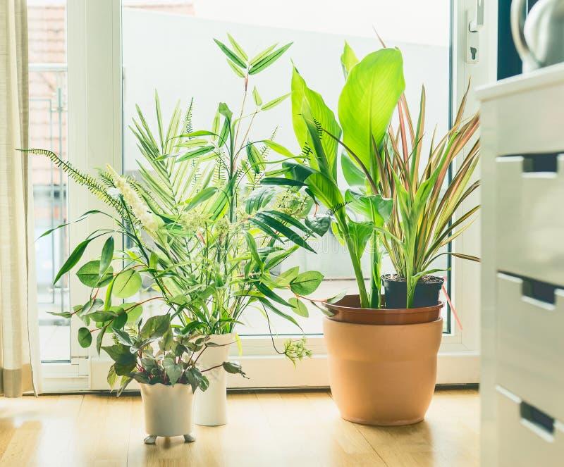 Disposition de pots de plante d'intérieur à la fenêtre dans le salon Vivant urbain et dénommer image stock